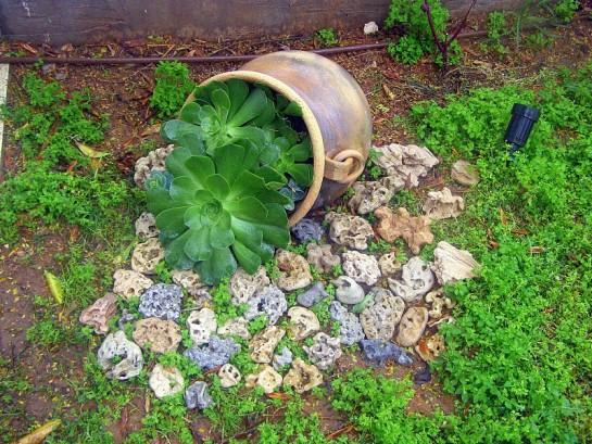 Подбираем растения для альпийской горки