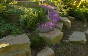 Цветы и камни. Естественная красота природы