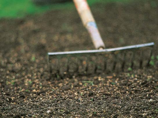 как сделать газон на участке