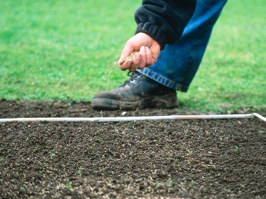 газонная трава как сажать