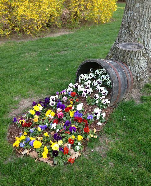 Небольшой цветник из старой бочки с разлитой по земле разноцветной виолой